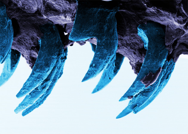 Limpet Teeth - University of Portsmouth