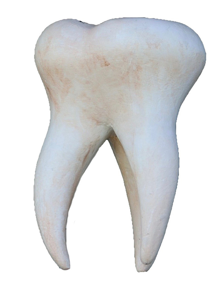 Tooth - Stock Photo
