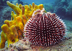 New Space Technology Modeled after Sea Urchin Teeth